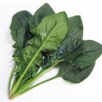 種 野菜たね ホウレン草 F1葉っぴーほうれんそう 1袋(50ml) / タネ たね ホウレンソウ ほうれんそう 法蓮草 ホウレン草 ホウレンソウ 法蓮草 法連草