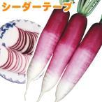 種 野菜たね シーダーテープ ダイコン F1紅あまちゃん 1袋(10メートル) / タネ たね画像