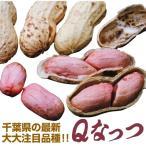 有用植物 ラッカセイ QなっつR(千葉P114号(P)) 2株 / 落花生の苗 ラッカセイの苗 ピーナッツ 苗 ピーナッツの苗