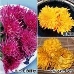 有用植物 食用菊セット 3種6株 / エディブルフラワー 食用花