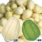 有用植物 ハヤトウリセット 2種4個