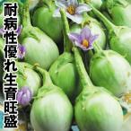 野菜たね 種 ナス F1まるみどり 1袋(0.5ml) / 野菜の種 なす 茄子 なすび 国華園 ytsc100
