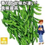 種 野菜たね エダマメ 湯上がり娘PVP(R) 1袋(40ml) / 野菜のタネ 野菜 種子 えだまめ 枝豆 【ytsc121】 国華園