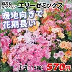 種 花たね レウィシア エリーゼミックス 1袋(15粒) / タネ 種 花壇 園芸 ガーデニング 国華園