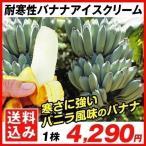 バナナ 苗 耐寒性バナナ アイスクリ