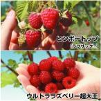 ラズベリー 苗 ラズベリーセット 2種2株 / キイチゴ 木苺 木いちご 苗木 果樹苗 国華園