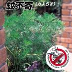 花苗 蚊不寄(カよらず) 1株 / 蚊除け 虫よけ 害虫対策 ハーブ よらず草 よらずぐさ アルテミシアサザンウッド