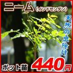 花苗 ニーム 1株/ 虫除け植物 ミラクルニーム 害虫対策 虫よけ ハーブ 無農薬栽培 天然の虫除け インドセンダン