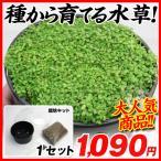 水生植物タネ 種から育てる水草キット 1セット 送料無料