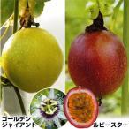 果樹苗 豊産パッションフルーツセット 2種2株