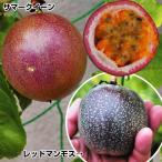 果樹苗 優秀パッションフルーツセット 2種2株
