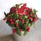 種 花たね ゴーセリア メニーベリー 1袋(30粒)