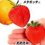いちご苗 でっかいイチゴセット 2種6株 / 苺苗 ストロベリー 家庭菜園 自給自足 国華園