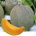 種 野菜たね メロン F1タカミレッド 1袋(10粒) / 野菜のタネ 野菜 種子 国華園