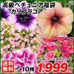 花苗 高級ペチュニア福袋 10株 (4品種以上・品種見計らい) 送料無料
