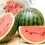 すいか 熊本産 ぴたまるすいか(1玉)S・Mサイズ 食べきり スイカ 西瓜 フルーツ 国華園