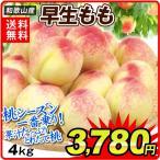 桃 和歌山産 早生桃(4kg)15〜22玉 ご家庭用 極早生 品種おまかせ もも ピーチ フルーツ 国華園