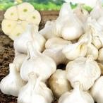 にんにく お買得 青森産 にんにく(3kg)1kg×3袋 ご家庭用 ホワイト六片 国産 野菜 国華園