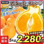 みかん 大特価 熊本産 ご家庭用 不知火オレンジ 5kg1箱 送料無料 【数量限定】 柑橘 食品 国華園