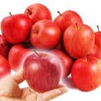 食品 青森産 ちびふじ 約20kg 木箱 1組 りんご 国華園