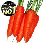 野菜たね ニンジン 大型五寸人参 1袋(10ml)