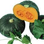 野菜たね カボチャ F1味てんぐ 1袋(5ml) / 種 タネ