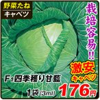 野菜種 野菜タネ キャベツ きゃべつ 甘藍