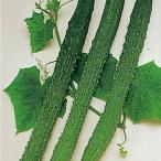 野菜たね キュウリ 四葉きゅうり 1袋(2ml) / 種 タネ