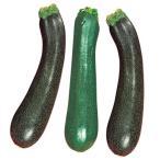 野菜たね カボチャ F1グリーンズッキーニ 1袋(5ml)