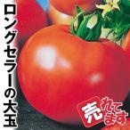 野菜たね トマト F1完熟ジュエル 1袋(0.5ml) / 種 タネ