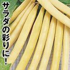 野菜たね インゲン 黄莢インゲン 1袋(20ml) / 種 タネ