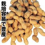 野菜たね マメ 落花生 1袋(20ml)