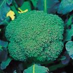 野菜種 野菜たね 国華園 タネ
