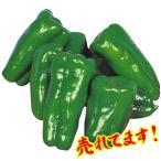 野菜たね ピーマン・シシトウ 金賞早生 1袋(3ml) / タネ 種