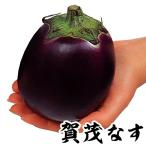 野菜たね ナス 賀茂なす 1袋(1ml) / 種 タネ
