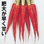 野菜たね ニンジン 真紅極早生金時 1袋(10ml)