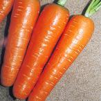 野菜たね ニンジン 時なし五寸人参 1袋(10ml)