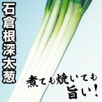 野菜たね ネギ 石倉根深太葱 1袋(10ml)