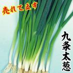 野菜たね ネギ 九条太葱 1袋(10ml) / タネ 種