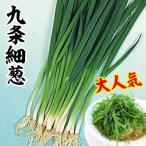 種 野菜たね ネギ 九条細葱 1袋(8ml) / 野菜のタネ 野菜 種子 ねぎ 葱 【YTC41】 国華園