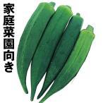 野菜たね オクラ オクラ 1袋(10ml) / 種 タネ