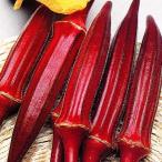 野菜たね オクラ 赤オクラ 1袋(10ml)