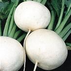 野菜たね カブ 春蒔白大かぶ 1袋(10ml)