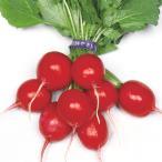 野菜たね ダイコン 赤丸二十日大根 1袋(15ml) / 種 タネ