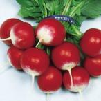 野菜たね ダイコン 丸型赤白二十日大根 1袋(15ml) / 種 タネ