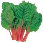 野菜たね 健康野菜 スイスチャード赤 1袋(5ml) / 種 タネ