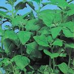 野菜たね 健康野菜 つる菜 1袋(10ml) / タネ 種