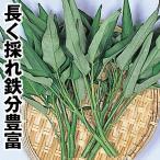 野菜たね 世界の野菜 エンサイ 1袋(10ml) / タネ 種