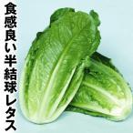 野菜たね レタス コスレタス 1袋(5ml)