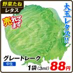 野菜たね 種 レタス グレートレーク 1袋(3ml) / 野菜の種 れたす 国華園